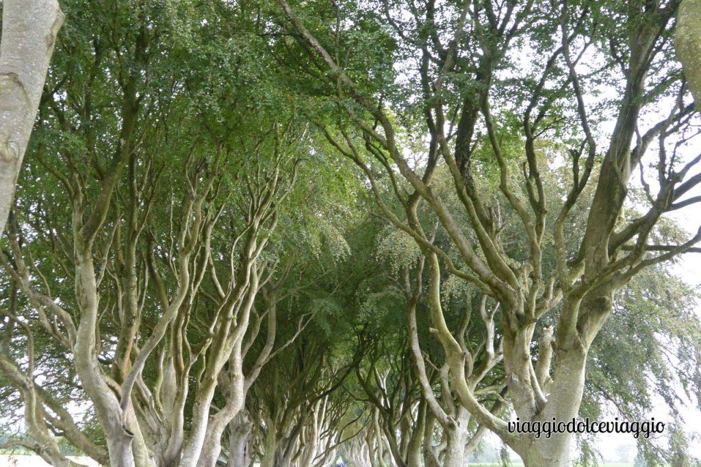 Cosa vedere in Irlanda del nord: Dark Hedges